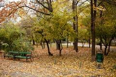 Opinião do outono no parque Imagens de Stock Royalty Free