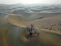 Opinião do pássaro do deserto de Taklamakan no inverno fotografia de stock royalty free