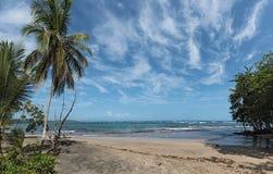 Opinião do panorama de uma praia com as palmeiras ao sul de Puerto Viejo de Talamanca, Costa Rica Fotografia de Stock Royalty Free