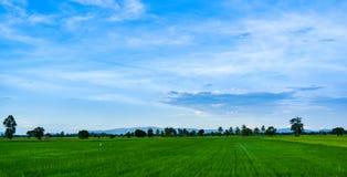 Opinião do panorama dos campos do verde e do céu azul Foto de Stock