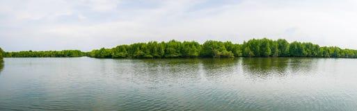 Opinião do panorama os manguezais Forest Conservation foto de stock royalty free