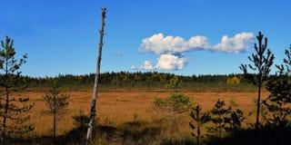 Opinião do panorama sobre o pântano Fotos de Stock Royalty Free