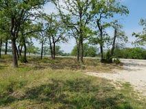 Opinião do parque de estacionamento - lago Nocona Texas foto de stock