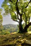 Opinião do parque de Wellington Fotografia de Stock Royalty Free