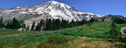 Opinião do ponto do panorama em Mt Rainier National Park Fotografia de Stock