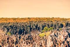 Opinião do por do sol na geografia original na reserva natural de Tsingy de Bemaraha Restrito em Madagáscar Fotos de Stock