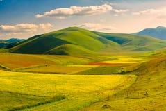 Opinião do prado perto de Castelluccio di Norcia Foto de Stock Royalty Free