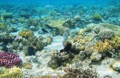 Opinião do recife de Corel Foto de Stock