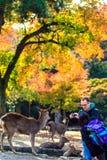 Opinião do stree de Nara com fundo agradável Imagem de Stock Royalty Free