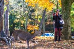 Opinião do stree de Nara com fundo agradável Fotos de Stock Royalty Free