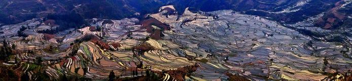 Opinião do terraço de China Yunnan Hani Fotografia de Stock