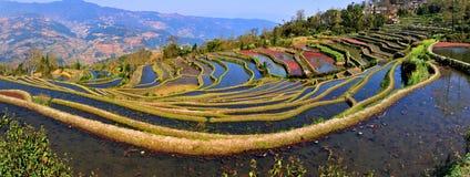 Opinião do terraço de China Yunnan Hani Imagem de Stock