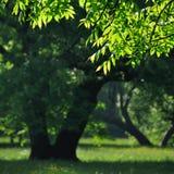 opinião do verão - através de um ramo Fotos de Stock Royalty Free