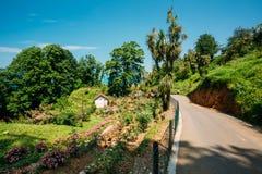 Opinião do verão Rose Flowers Plantation On Hillside em botânico foto de stock