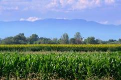 Opinião dos campos das plantações de Balcãs Fotos de Stock