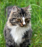 Opinião dos gatos Imagem de Stock Royalty Free