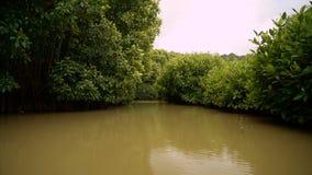Opinião dos kebumen do ayah dos manguezais de Hutan do barco video estoque