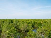 Opinião dos manguezais de cima nos manguezais Forest Conservation imagem de stock