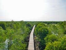 Opinião dos manguezais de cima nos manguezais Forest Conservation Lubuk Kertang, Sumatra norte, Indonésia imagem de stock royalty free