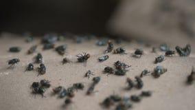 Opinião dramática a mosca que morre colada vídeos de arquivo