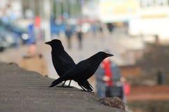 Opinião e melros da praia de Paignton Imagem de Stock Royalty Free