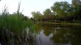 Opinião e patos do lago filme