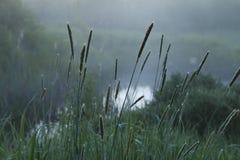 Opinião enevoada da manhã sobre a água Foto de Stock