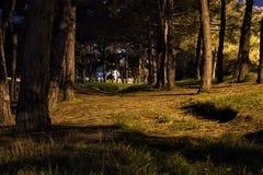 Opinião escura do parque da noite fotos de stock royalty free