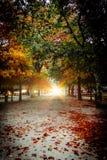 Opinião espetacular Autumn Leaves imagem de stock royalty free