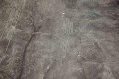 A opinião famosa o colibri em Nazca, Peru foto de stock