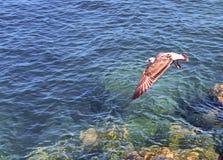 Opinião a gaivota do voo Fotografia de Stock Royalty Free