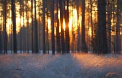 Opinião gelado da manhã do outono da floresta fotos de stock royalty free