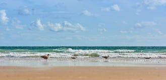 Opinião horizontal com gaivotas, baixo ângulo do mar Imagens de Stock Royalty Free