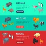 Opinião isométrica do grupo horizontal da bandeira dos animais selvagens 3d Vetor ilustração royalty free