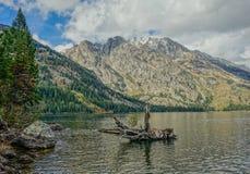 Opinião Jackson Lake no parque nacional grande de Teton com uma árvore que encontra-se na costa do lago Imagem de Stock Royalty Free