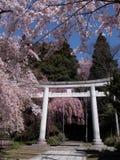 Opinião japonesa da mola Imagem de Stock Royalty Free
