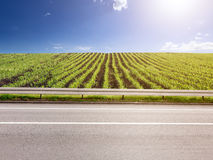 Opinião lateral colheitas vazias da estrada asfaltada e do milho Imagens de Stock