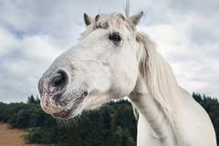Opinião lateral de cabeça de cavalo branco com floresta em um fundo imagem de stock royalty free