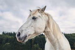 Opinião lateral de cabeça de cavalo branco com floresta em um fundo fotografia de stock
