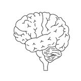 opinião lateral do cérebro Fotografia de Stock