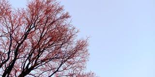 Opinião lateral do céu com a foto bonita do estoque da árvore fotos de stock