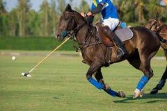 Opinião lateral o jogador do polo do cavalo Fotos de Stock Royalty Free