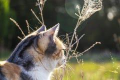 Opinião lateral parcial um gato que olha fixamente em uma Web de aranha imagem de stock royalty free