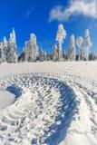 Opinião mágica do inverno fotos de stock royalty free