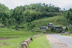 Opinião Mawsynram do campo, Índia Foto de Stock Royalty Free