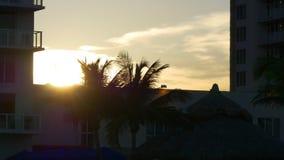 Opinião movente 4k florida EUA do apartamento do vento da palma da praia do souyj de miami do por do sol video estoque