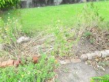 Opinião natural da beleza da virgem do jardim Foto de Stock Royalty Free