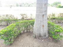 Opinião natural da beleza da virgem do jardim Fotografia de Stock Royalty Free