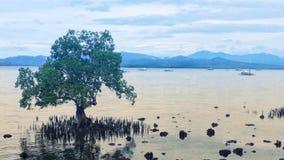 Opinião natural do lago imagem de stock