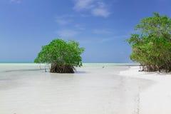 Opinião natural lindo do fundo da paisagem da turquesa, oceano tranquilo com as árvores verdes que fundem com o céu bonito claro  fotografia de stock royalty free